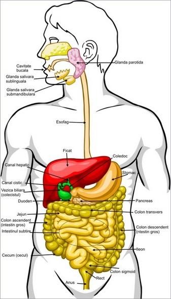 curatare intestin gros)